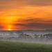 Misty sunrise by mike.saupe78