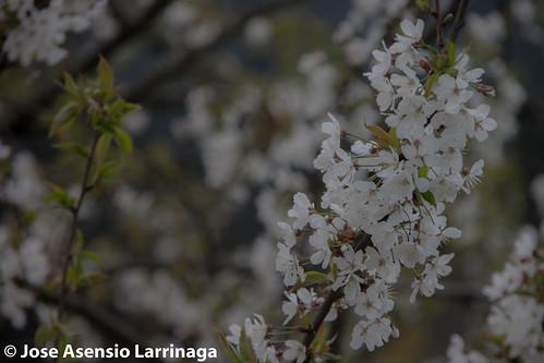 Primavera 2015 #DePaseoConLarri #Flickr -009