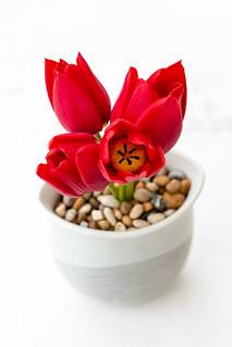 2015-04-25_Flower