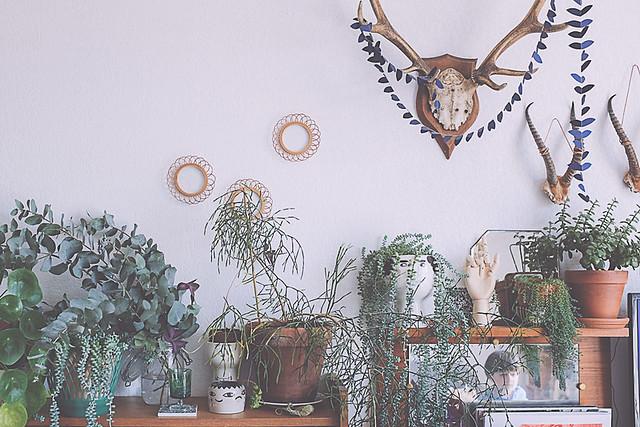 décoration d'intérieur style vintage et plantes vertes
