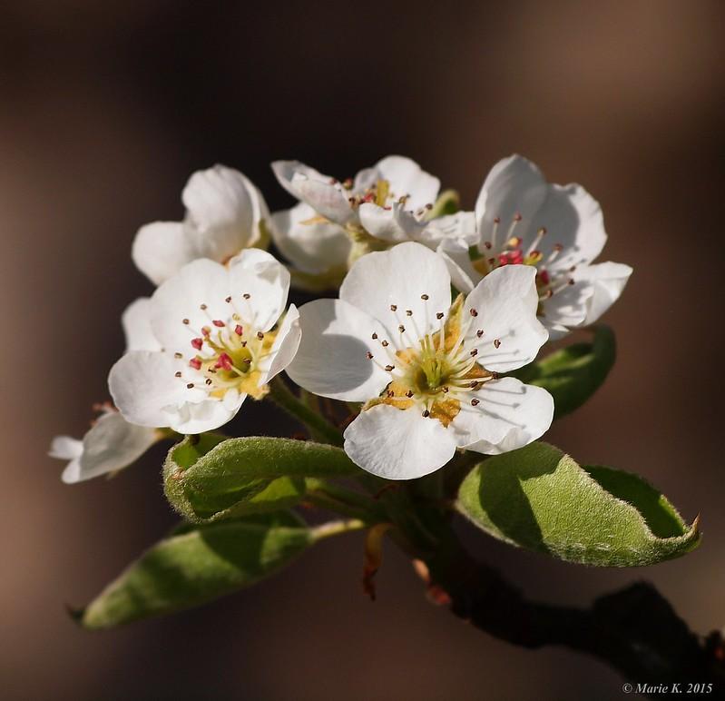 Bouquet de fleurs + (màj. 13 04 ) carré 17133307025_8b3950c5bf_c