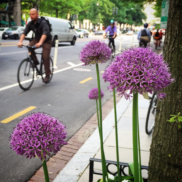 Look out - mutant spores along the cycletrack #bikedc #pollen #igdc