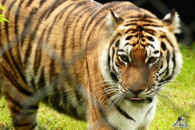 Tierpark Hagenbeck 25.04.2015   216