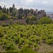 Te contamos algunas curiosidades de la vid, que se cultiva en las Huertas del Generalife