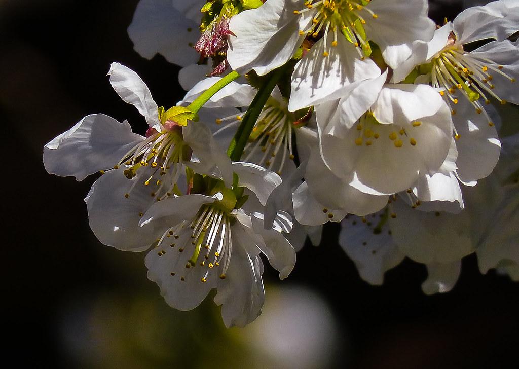 Cascata di Primavera