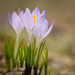 NR-20150426-Canon EOS 60D-8870 by Nancy Rose