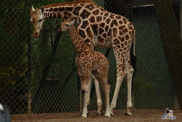 Tierpark Hagenbeck 25.04.2015   165