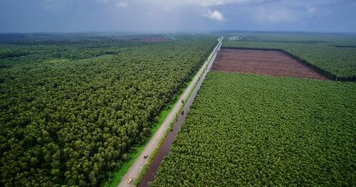 green nature paper sumatra indonesia aerialview aerialphotography paperpulp peopleandnature riausumatra paperpulpplantation naturalclimatesolutions
