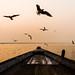 Flight | Varanasi,India