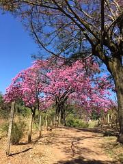 São Joaquim de Bicas, Minas Gerais, 2016.