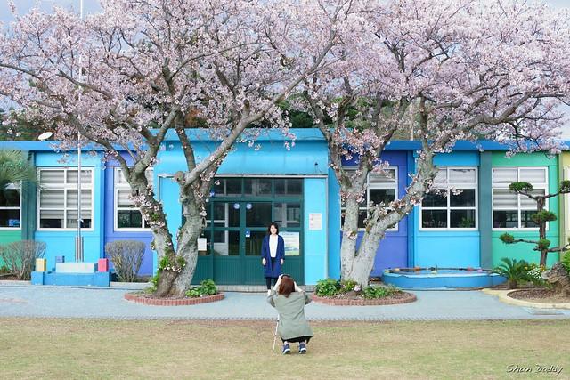 Under Sakura