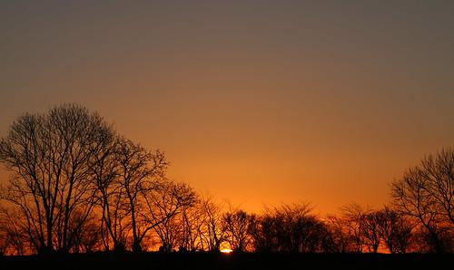 trees sunset sky landscape sonnenuntergang sundown dusk træer træ himmel serene solnedgang