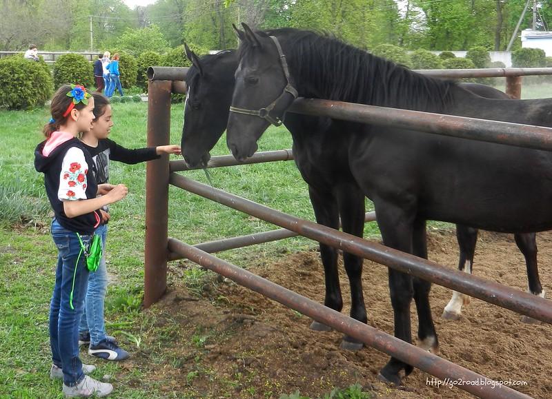 Общение с лошадьми,Дубровка
