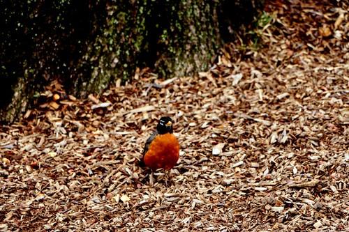 Central Park: piccolo uccellino