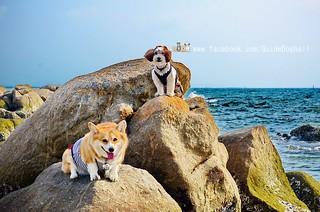 หาดบางแสน หมาเข้าได้ไหม