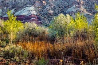 spring color, Fremont River, Utah