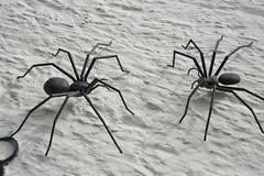 arthropod, animal, spider, invertebrate, insect, macro photography, fauna, close-up,