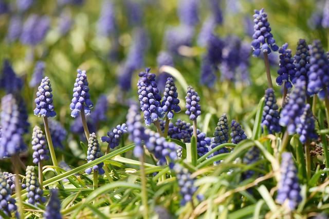 日, 2015-04-19 14:21 - Brooklyn Botanic Garden