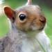 Squirrel portrait by Zsaj