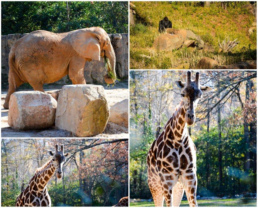 elephant. gorilla. giraffe