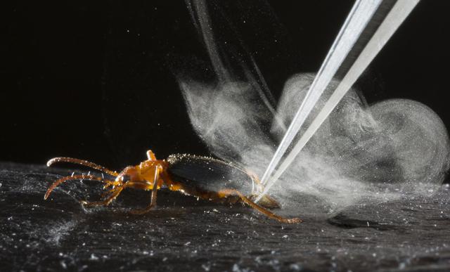 escarabajobomba3