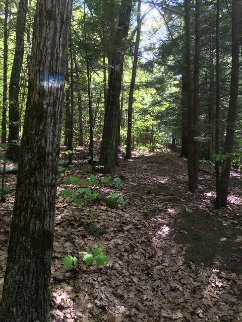 Lebanon, New Hampshire, Starr Hill