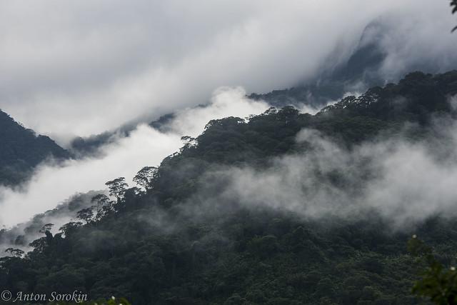 Cordillera escallera