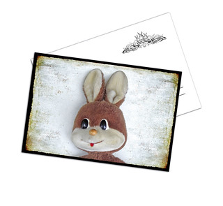 Funny Bunny A 27
