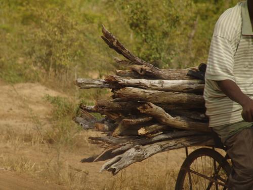Feuerholznutzung in Kenia