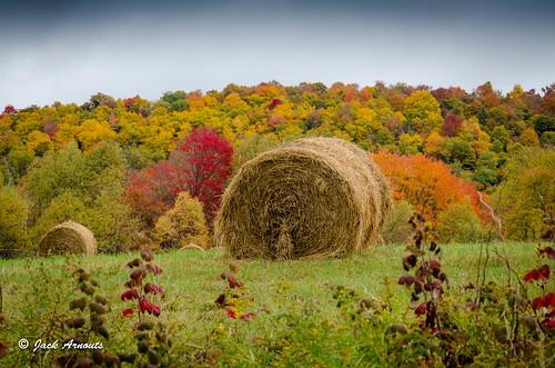 color countryroads fall farm farmland landscape pa pennsylvania scenic travel trees vacations country damascus unitedstates
