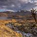 Loch Quoich View. by Gordie Broon.