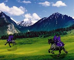 pnthr hrs bttrfly ranch