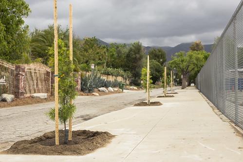 Arbor Day Celebration - 4/25/15