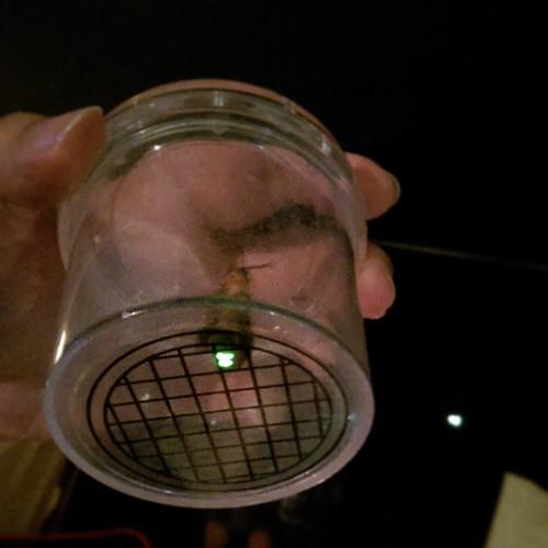 20150501 晚上螢火蟲來作客  #歐北露