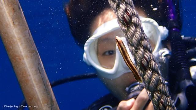ラダーのロープに可愛らしいニジギンポの幼魚が!