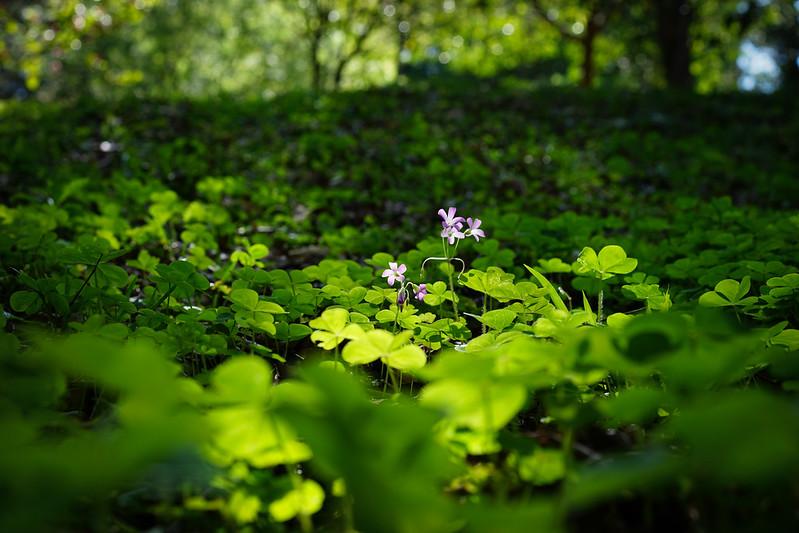 Green|嘉義公園