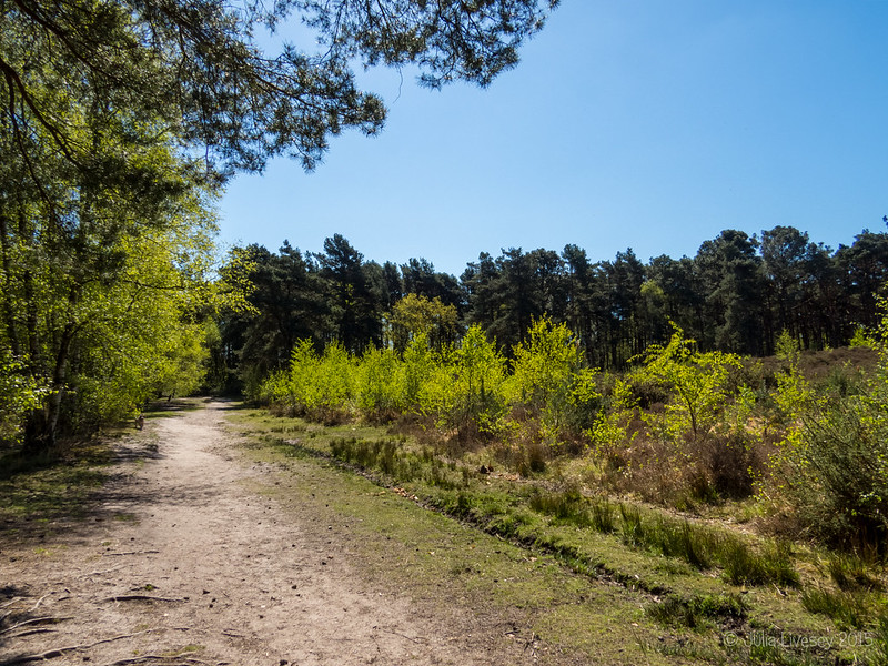 The greening of Upton Heath