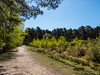 The greening of Upton Heath