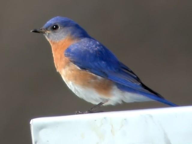 Bluebird HDR 20150501