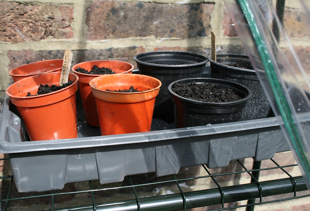 pots in the greenhouse