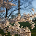 Washington Monument through the blossoms. by Mr_Darling