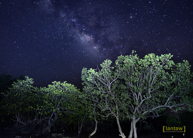 Mangroves under a starry night