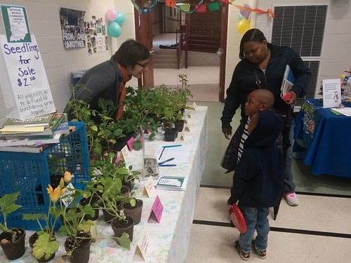20150425. Seedling Sale at IPS School 91's Our Community Day.