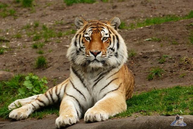 Tierpark Hagenbeck 25.04.2015   213