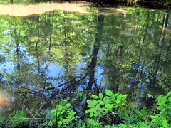A peaceful pond's reflection with a ripple included.