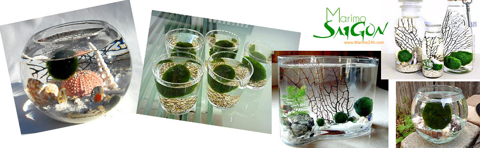 cayxanh24h.com | marimo | cau tao nhat ban | cay thuy sinh