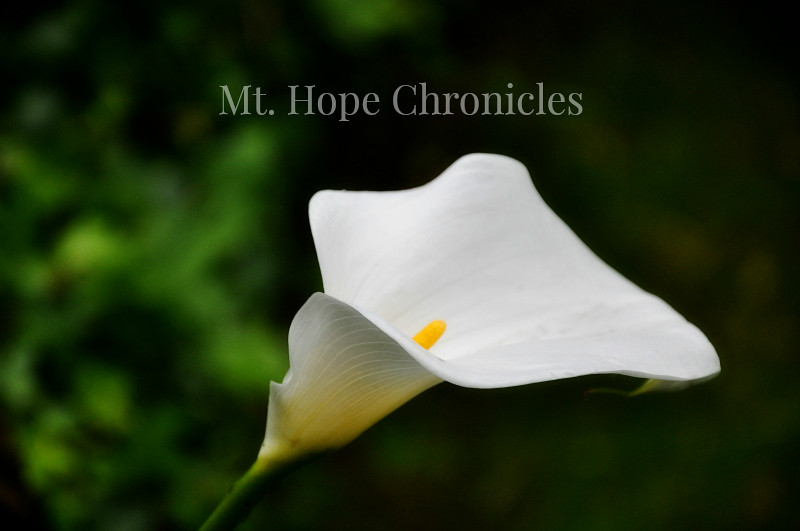 Food for Thought - May Edition @ Mt. Hope Chronicles