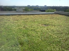 Green roof on Canal Building at Carleton University