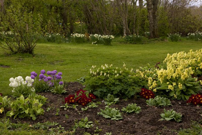 Garden, April 2015