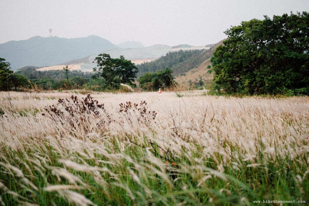 Untitled 白茅草 踩單車就是可以找到這樣的仙境﹣白茅草失樂園 16666165873 fd6cc144f0 o